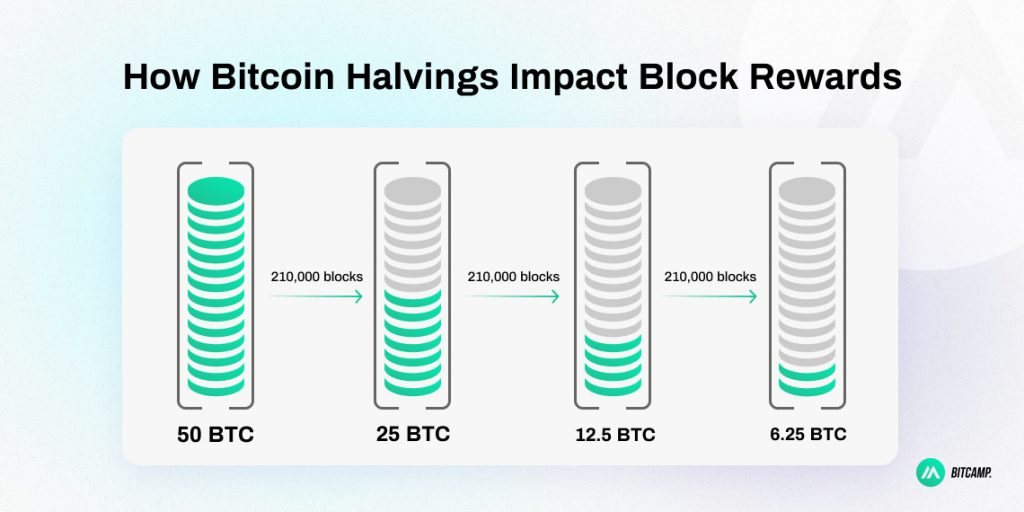 Bitcoin Halvings and Rewards Infographic